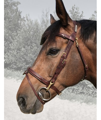 Cavaletti Bridle Easy Oak