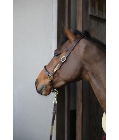 Kentucky Horsewear Grooming Halter