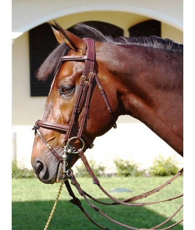 Dyon Double Bridle Flash Noseband