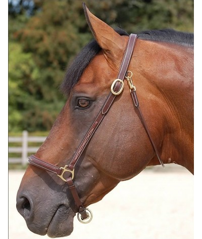 Dyon Fancy Grooming Head Collar 'Dyon Collection'